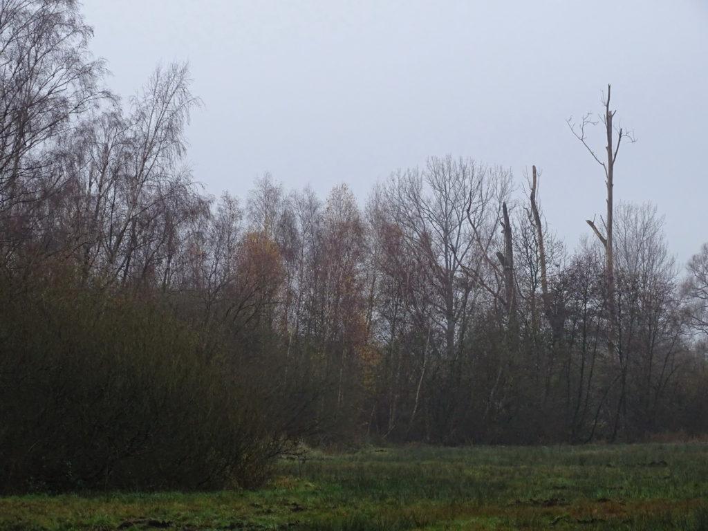 Ein Blick auf den Waldstreifen